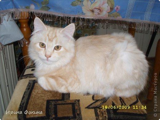 Здравствуйте! Меня зовут Мурзик, правда по старой памяти меня хозяйка называет  Барсиком, так звали прошлого кота. А полгода я вообще Мусей был, потому что моя хозяйка думала, что я кошка. Но через полгода, когда я подрос и стал мужчиной, стало неожиданно понятно совсем обратное.  фото 16