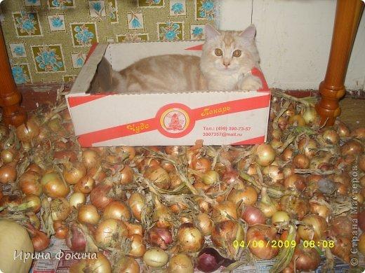 Здравствуйте! Меня зовут Мурзик, правда по старой памяти меня хозяйка называет  Барсиком, так звали прошлого кота. А полгода я вообще Мусей был, потому что моя хозяйка думала, что я кошка. Но через полгода, когда я подрос и стал мужчиной, стало неожиданно понятно совсем обратное.  фото 14