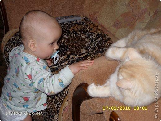 Здравствуйте! Меня зовут Мурзик, правда по старой памяти меня хозяйка называет  Барсиком, так звали прошлого кота. А полгода я вообще Мусей был, потому что моя хозяйка думала, что я кошка. Но через полгода, когда я подрос и стал мужчиной, стало неожиданно понятно совсем обратное.  фото 10