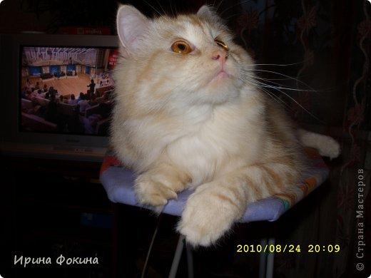 Здравствуйте! Меня зовут Мурзик, правда по старой памяти меня хозяйка называет  Барсиком, так звали прошлого кота. А полгода я вообще Мусей был, потому что моя хозяйка думала, что я кошка. Но через полгода, когда я подрос и стал мужчиной, стало неожиданно понятно совсем обратное.  фото 11