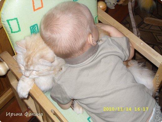Здравствуйте! Меня зовут Мурзик, правда по старой памяти меня хозяйка называет  Барсиком, так звали прошлого кота. А полгода я вообще Мусей был, потому что моя хозяйка думала, что я кошка. Но через полгода, когда я подрос и стал мужчиной, стало неожиданно понятно совсем обратное.  фото 6