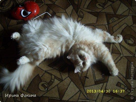Здравствуйте! Меня зовут Мурзик, правда по старой памяти меня хозяйка называет  Барсиком, так звали прошлого кота. А полгода я вообще Мусей был, потому что моя хозяйка думала, что я кошка. Но через полгода, когда я подрос и стал мужчиной, стало неожиданно понятно совсем обратное.  фото 4