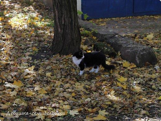 Я очень люблю золотую осень! Возможно потому, что в октябре у меня день рождения! А возможно потому, что природа наполнена такими яркими красками! Не знаю почему, но именно в это время года на душе мне становится очень хорошо, спокойно...  фото 5