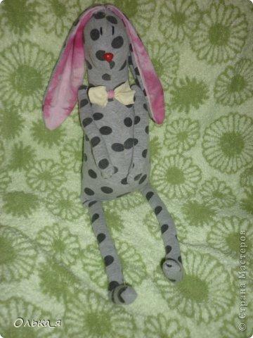 заяц фото 3