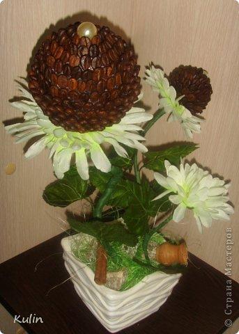 вот такие кофейные цветочки сложились... фото 2