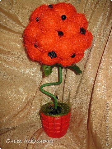Апельсиновое дерево фото 8
