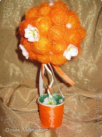 Апельсиновое дерево фото 4
