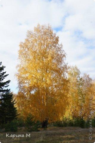 Приглашаю прогуляться по природе Тюменской области. река Исеть. фото сделано 20 октября фото 3