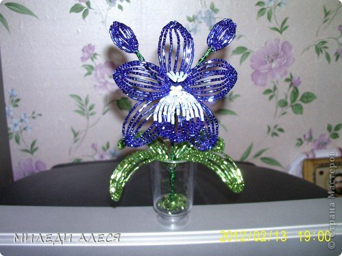 синяя орхидея фото 1
