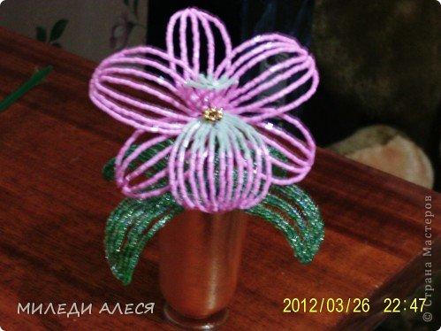 синяя орхидея фото 3