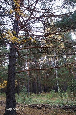 Приглашаю прогуляться по природе Тюменской области. река Исеть. фото сделано 20 октября фото 4
