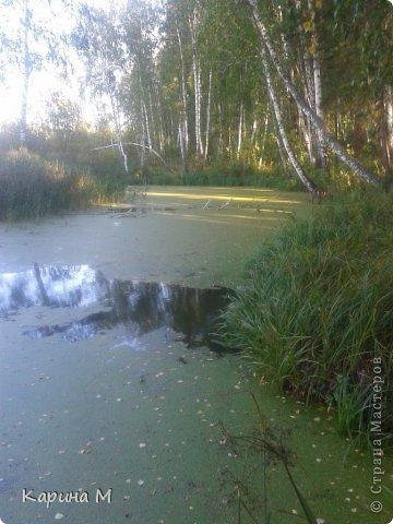 Приглашаю прогуляться по природе Тюменской области. река Исеть. фото сделано 20 октября фото 11