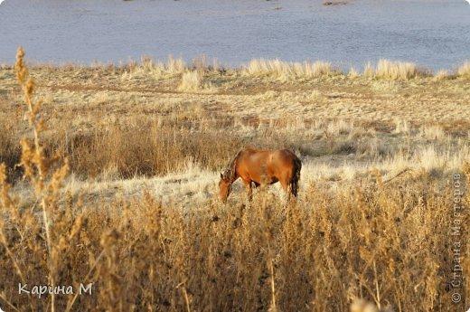 Приглашаю прогуляться по природе Тюменской области. река Исеть. фото сделано 20 октября фото 13