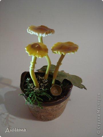 в лес за грибочками фото 3