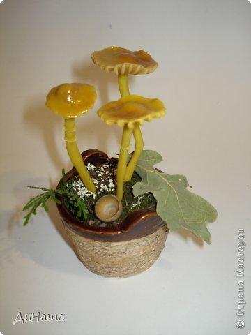 в лес за грибочками фото 2