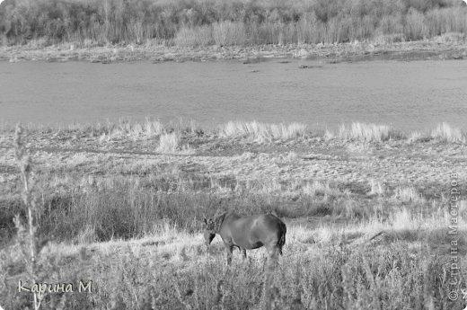 Приглашаю прогуляться по природе Тюменской области. река Исеть. фото сделано 20 октября фото 16