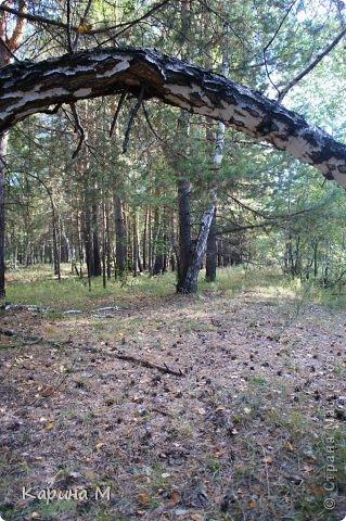 Приглашаю прогуляться по природе Тюменской области. река Исеть. фото сделано 20 октября фото 18