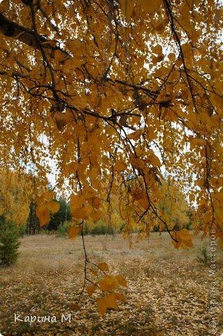 Приглашаю прогуляться по природе Тюменской области. река Исеть. фото сделано 20 октября фото 26