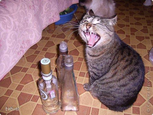 А знаете ли вы, что можно  подарить любимому коту на день рождения?  Скорее всего только лакомство. И в придачу еще сковородочку, сделанную с любовью к любимому Тришке. фото 8