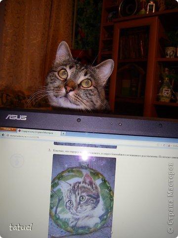 А знаете ли вы, что можно  подарить любимому коту на день рождения?  Скорее всего только лакомство. И в придачу еще сковородочку, сделанную с любовью к любимому Тришке. фото 9