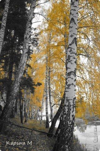 Приглашаю прогуляться по природе Тюменской области. река Исеть. фото сделано 20 октября фото 30