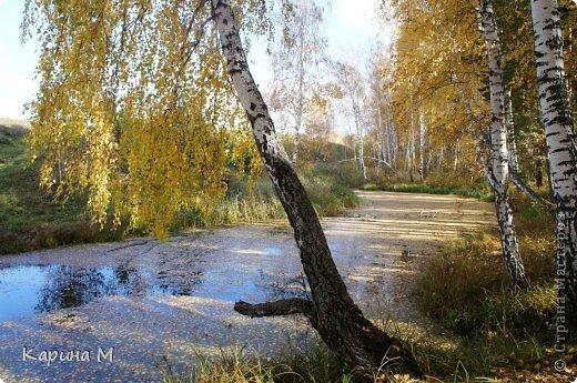 Приглашаю прогуляться по природе Тюменской области. река Исеть. фото сделано 20 октября фото 35