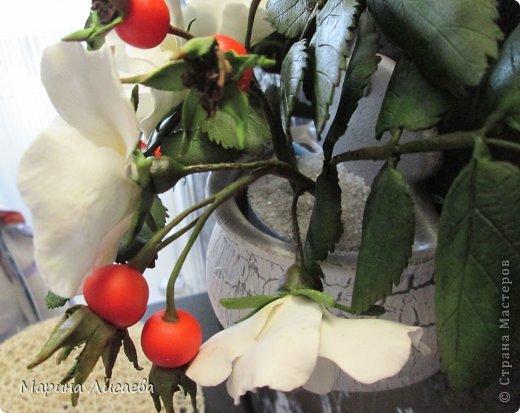 Здравствуйте, уважаемые жители СМ! Со вчерашнего дня на моей кухне поселился белый шиповник.  фото 7
