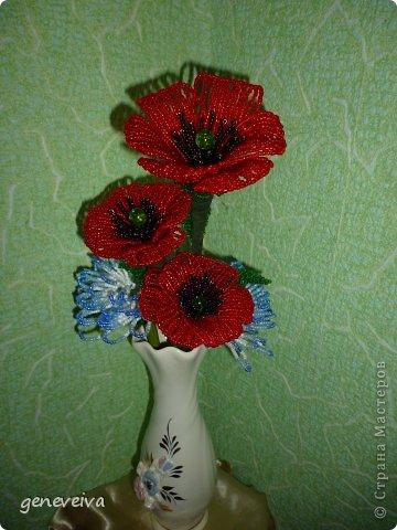 Моя первая орхидея фото 10