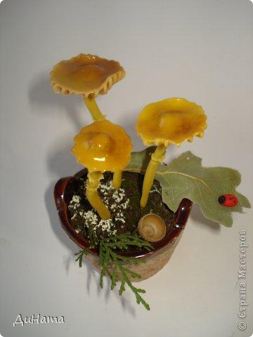 в лес за грибочками фото 5