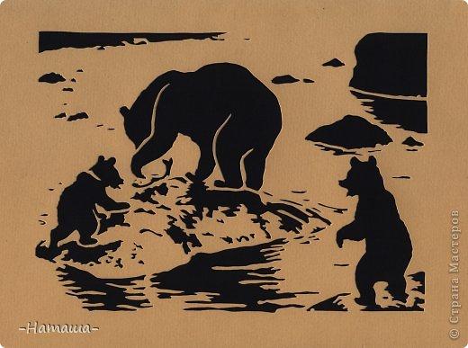 Медведи фото 1