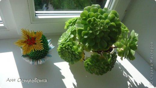 Модульный кактус фото 2
