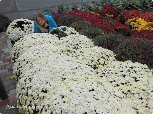Сегодня хочу показать какая осеняя красота цветёт в нашем дворе)