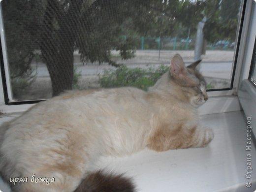 Я любительница кошек. С тех пор как вышла замуж(24 года назад) столько же у меня живут коты.Всегда. разные но есть. Про Ваську,Барсика и Кузю я уже писала(см.блог). Решила показать свою маленькую коллекцию кошек, которые у меня дома и на работе. фото 22