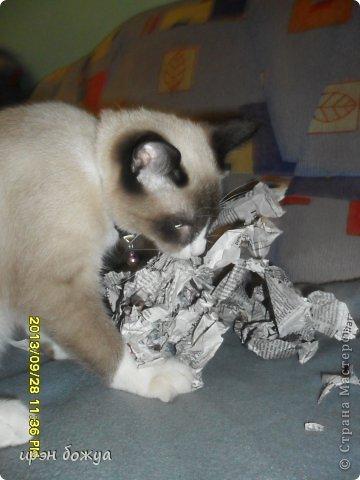 Я любительница кошек. С тех пор как вышла замуж(24 года назад) столько же у меня живут коты.Всегда. разные но есть. Про Ваську,Барсика и Кузю я уже писала(см.блог). Решила показать свою маленькую коллекцию кошек, которые у меня дома и на работе. фото 24