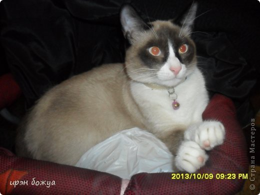 Я любительница кошек. С тех пор как вышла замуж(24 года назад) столько же у меня живут коты.Всегда. разные но есть. Про Ваську,Барсика и Кузю я уже писала(см.блог). Решила показать свою маленькую коллекцию кошек, которые у меня дома и на работе. фото 25