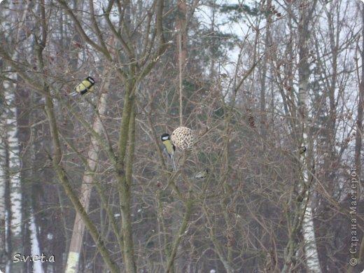 Третий год подряд с сыном делаем вот такие кормушки для птиц. Они у пернатых пользуются успехом) фото 8
