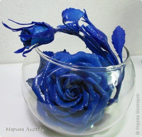 Здравствуйте, уважаемые жители СМ! Ах, как давно я мечтала о синей розе! И наконец - вот она! фото 1