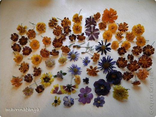 Флористика Неувядающая красота или как засушить цветы  МК Крупа Материал природный фото 4