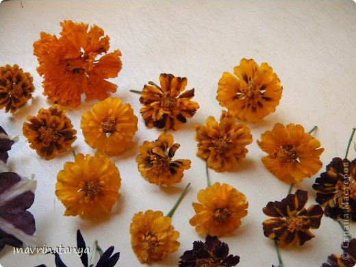 Флористика Неувядающая красота или как засушить цветы  МК Крупа Материал природный фото 9
