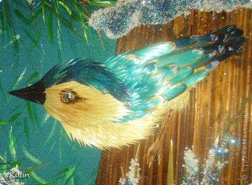вот такие почти голубые птички прилетели из ближайшего лесочка... фото 2