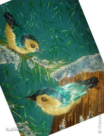 вот такие почти голубые птички прилетели из ближайшего лесочка... фото 4