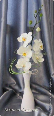 Здравствуйте, уважаемые жители Страны Мастеров! Наконец-то я слепила свою давнюю мечту- орхидею. Временно поставила ее в вазочку. Хотела сделать с ней композицию, но..... не успела. На нее нашелся покупатель, который захотел забрать ее в таком виде. Лепила из полимерной глины Модена. Глина конечно отличная, работать с ней одно удовольствие. Выставляю свою работу на ваш компетентный суд. фото 2