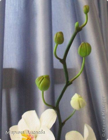 Здравствуйте, уважаемые жители Страны Мастеров! Наконец-то я слепила свою давнюю мечту- орхидею. Временно поставила ее в вазочку. Хотела сделать с ней композицию, но..... не успела. На нее нашелся покупатель, который захотел забрать ее в таком виде. Лепила из полимерной глины Модена. Глина конечно отличная, работать с ней одно удовольствие. Выставляю свою работу на ваш компетентный суд. фото 3