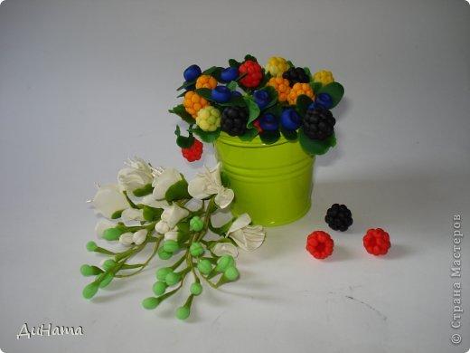 захотелось мне ягод,только оформить их хочу в белой чайной чашке,чтобы на блюдечке выложить три ягодки,а может еще и плиточку шоколада слепить. А пока они в ведре))) фото 3