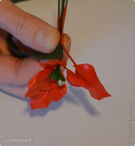 Мастер-класс Флористика Новый год Лепка Рождественский цветок пуансетия из холодного фарфора Фарфор холодный фото 36