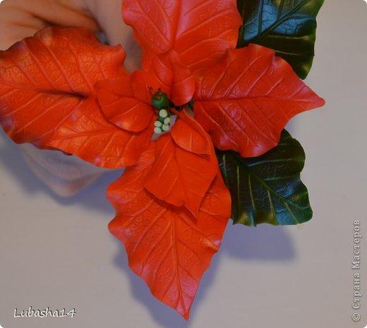 Мастер-класс Флористика Новый год Лепка Рождественский цветок пуансетия из холодного фарфора Фарфор холодный фото 37