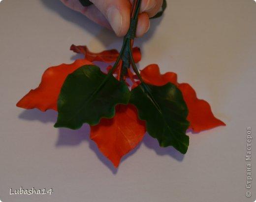 Мастер-класс Флористика Новый год Лепка Рождественский цветок пуансетия из холодного фарфора Фарфор холодный фото 38