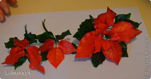 Мастер-класс Флористика Новый год Лепка Рождественский цветок пуансетия из холодного фарфора Фарфор холодный фото 40