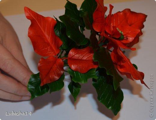 Мастер-класс Флористика Новый год Лепка Рождественский цветок пуансетия из холодного фарфора Фарфор холодный фото 42