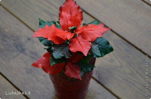 Мастер-класс Флористика Новый год Лепка Рождественский цветок пуансетия из холодного фарфора Фарфор холодный фото 54